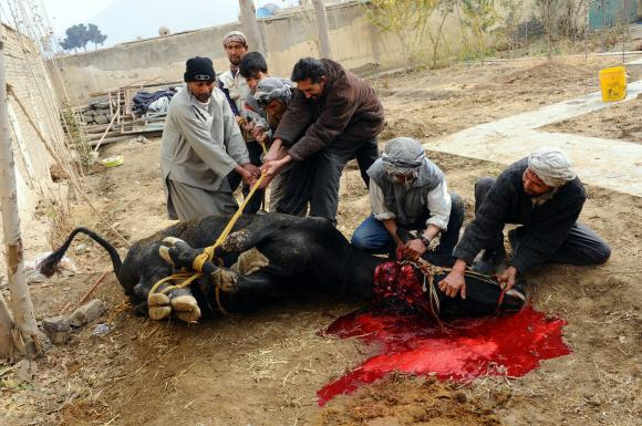 Afghans-slaughter-animals-for-Eid-al-Adha-in-Kabul_15