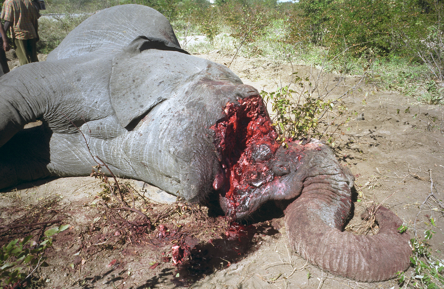 animal poaching 1_1