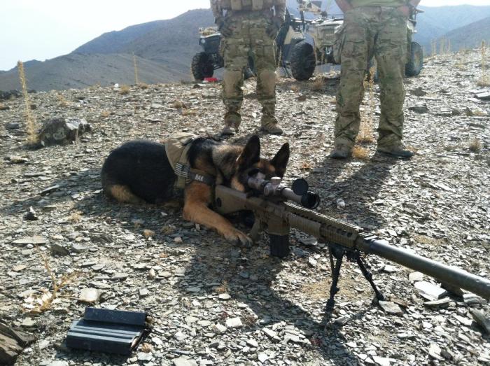 BAK-the-sniper-e1369677922806