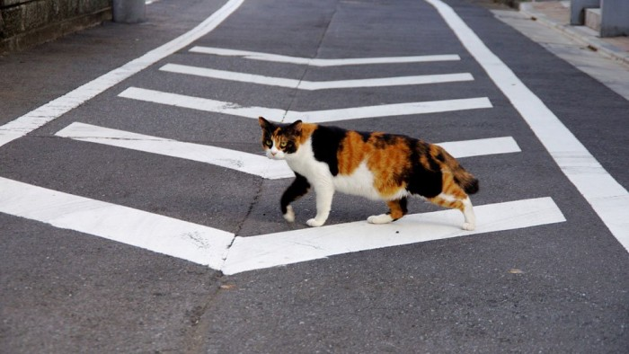 cat-on-the-road-e1374035432206