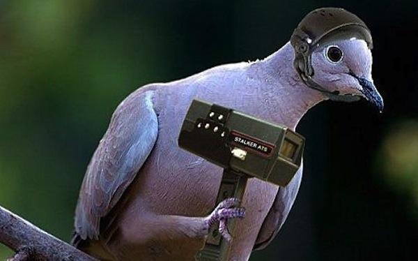 spy-bird
