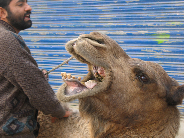 """""""Not now, camel breath, I'm fasting!"""""""