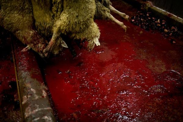 Halal slaughterhouse