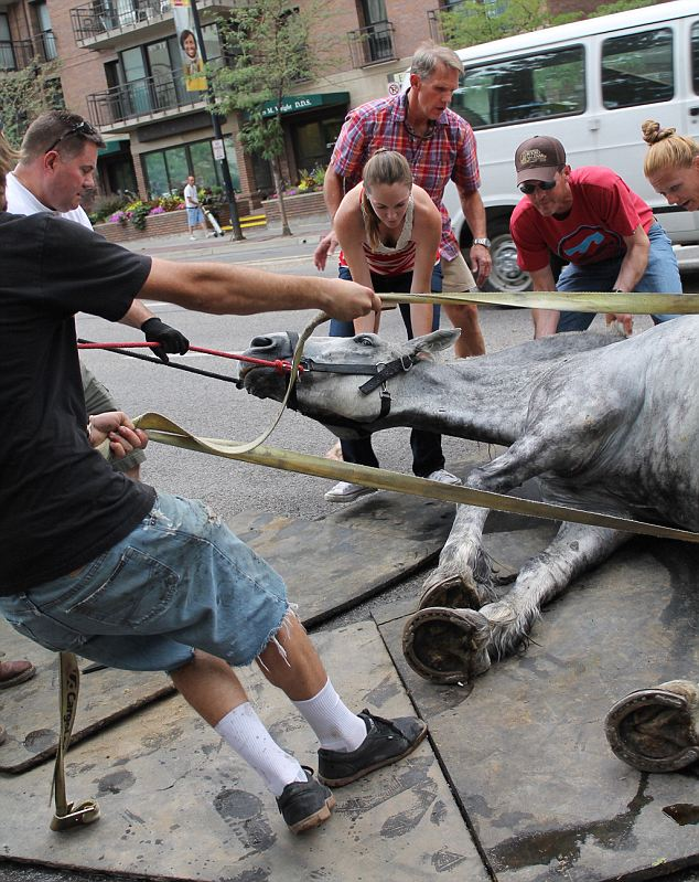 Carriage Horse Collapse