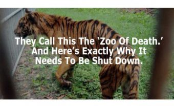zoo-of-death-e1398149828116
