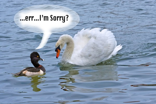 "Angry swan  accuses media of being ""Swanophobic"""