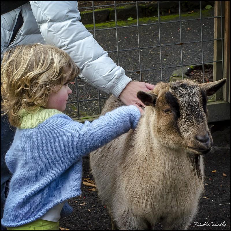 goat-child