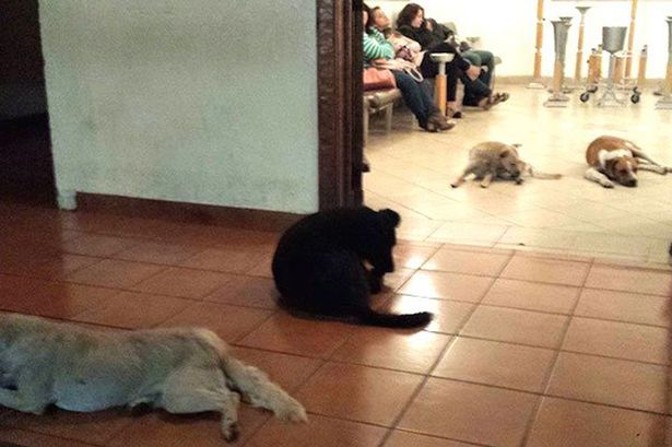 Stray-dogs-attend-funeral-of-lady-that-used-to-feed-them-2