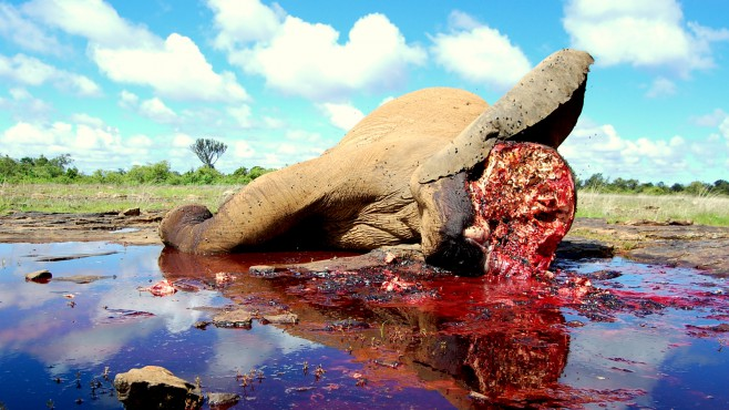 photo-credit-mugie-ranch-elephant-poached-on-mugie-last-yearprotect0010001000crop658370c