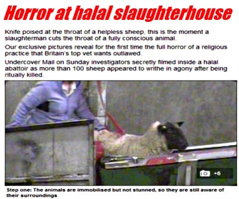 horror_at_halal_slaughterhouse_t1
