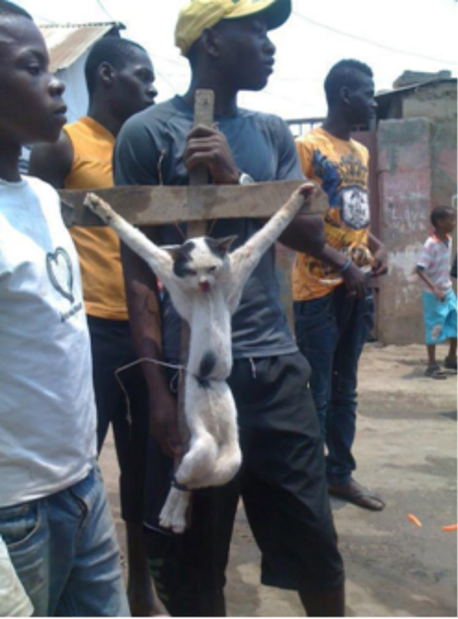 Muslim youths in Ghana crucify a cat to mock Jesus as a protest against anti-Islam movie