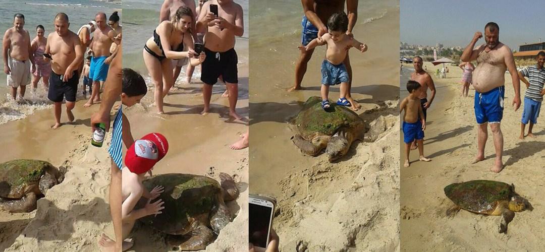 selfie-turtle