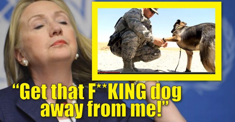 hillary-hates-dogs-01-800x416